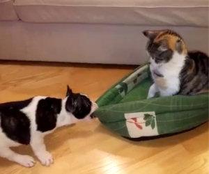 Cucciolo rivuole il suo lettino