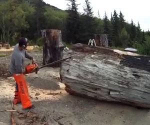 Da un semplice enorme tronco crea un'opera d'arte stupenda