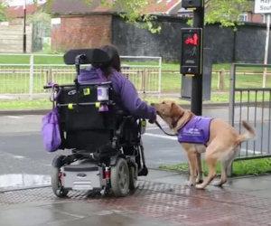 Ecco ciò che questo cane fa ogni giorno per questa donna disabile