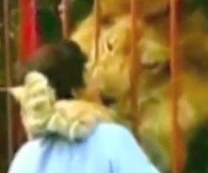Donna incontra il leone che ha cresciuto