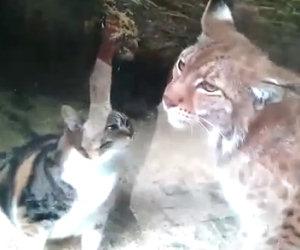 Due strani amici allo zoo