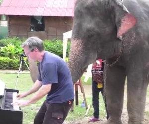 Duetto al pianoforte con un elefante