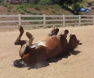 Ti sei mai chiesto come scoreggia un elegante cavallo?