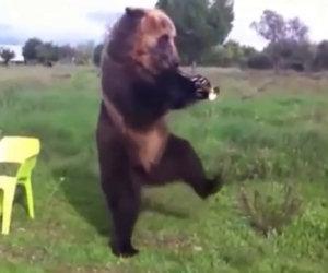 Ecco gli animali che ballano