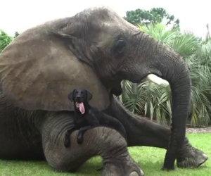 Elefante e cane, migliori amici