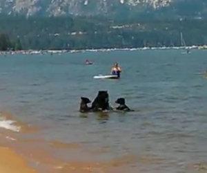 I bagnanti di questo lago assistono ad una scena incredibile