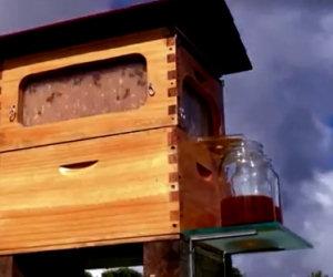 Mettono due barattoli di fronte la casa delle api. Un'invenzione geniale!