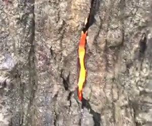Fulmine cade su un albero e causa uno strano e affascinante fenomeno