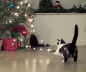 Gatti che distruggono alberi di Natale