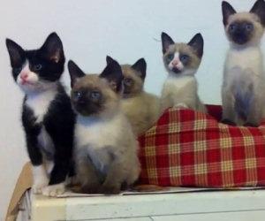 Gatti muovono la testa in sincrono
