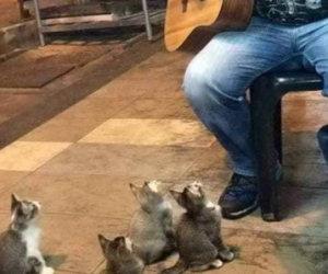 Un chitarrista inizia a suonare, ecco chi arriva ad ascoltarlo