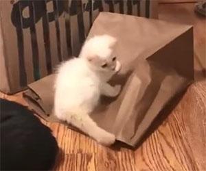Gattini si divertono a nascondino, guarda come va a finire