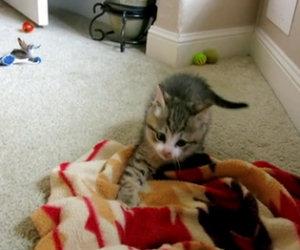 Gattino cieco gioca per la prima volta