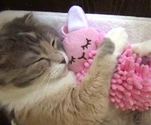 Gatto abbraccia il suo peluche