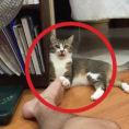 Un gatto affronta il piede del padrone, la reazione è esilarante