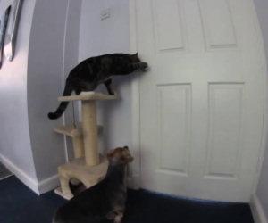 Gatto aiuta cane a scappare