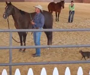 Gatto attacca un cavallo