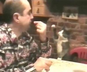 Gatto chiede al sordo di mangiare