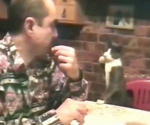 L'incredibile gatto che comunica a gesti con il suo padrone
