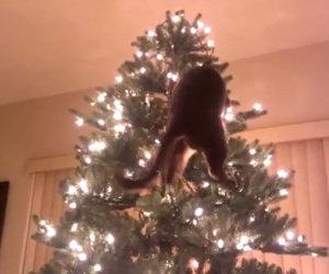 Niente di più divertente per un gatto che distruggere l'albero di Natale