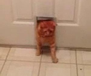 Gatto, è tempo di fare una dieta!