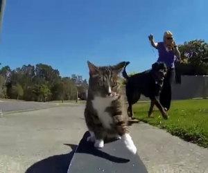 Il modo in cui questo gatto gira per la città lascia tutti a bocca aperta