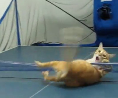 Gatto non rispetta regole del ping pong