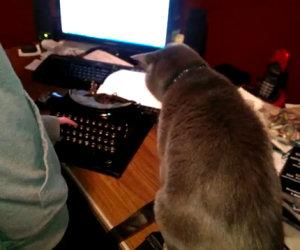 Gatto odia la macchina da scrivere