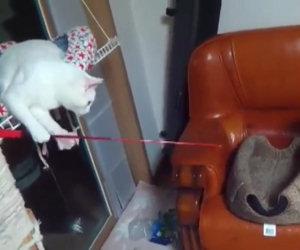 Gatto pesca un altro gatto