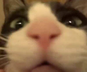 Gatto rivede padrona dopo 3 giorni