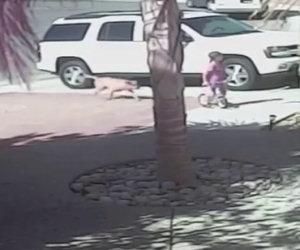 Gatto salva bimbo da un cane feroce