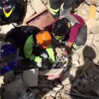 Un gatto viene salvato dopo 16 giorni sotto le macerie del terremoto
