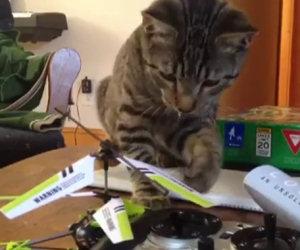 Gatto sconfitto da elicottero giocattolo