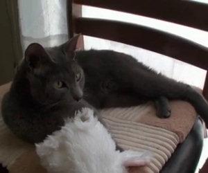 Gatto si trasforma in coniglietto