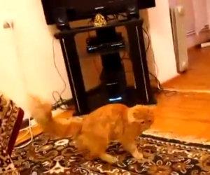 Questo gatto si terrorizza quando ascolta la canzone di Super Mario