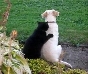 Il gatto che massaggia il cane