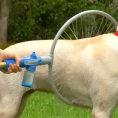 Un'invenzione geniale che faciliterà la vita dei cani e dei padroni