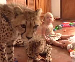 Due piccoli ghepardi vengono adottati e giocano con i bambini