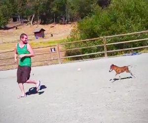 Un pony con tre giorni di vita gioca con il suo amico umano