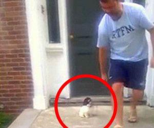 Questo cucciolo ha paura delle scale, ecco come risolve il probema