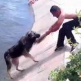 Ecco i dieci salvataggi di cani più incredibili di tutti i tempi