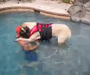 Il padrone insegna a nuotare al suo cane che ha paura dell'acqua