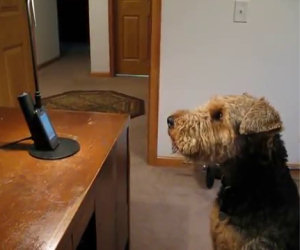 Il cane che parla al telefono