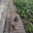 Chiede al cane di riportare a casa il gatto, ecco che succede