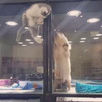 Credete che il gatto stia fuggendo? Niente affatto, ecco cosa fa...