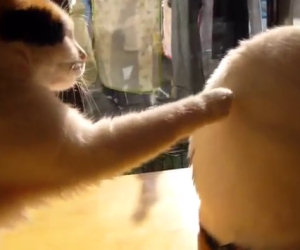 Il gatto e l'amico indifferente