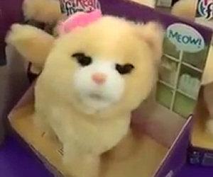 Il gatto giocattolo posseduto