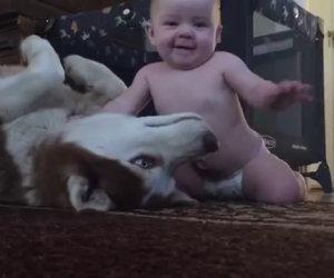 Il neonato stuzzica il cane, la sua reazione è di una dolcezza unica