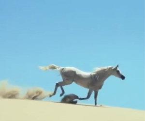Il più bel filmato sui cavalli