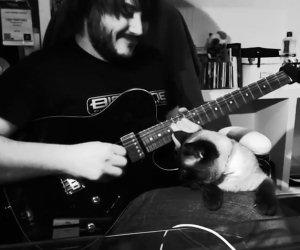Impossibile suonare con questo gatto
